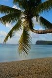 Palmträd på den Ypao stranden, Guam royaltyfria bilder