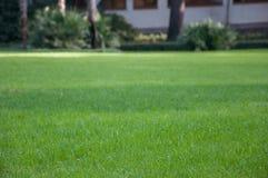 Palmträd på en bakgrund av grön gräsmatta i ett exotiskt parkerar Royaltyfri Foto