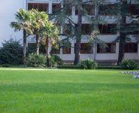 Palmträd på en bakgrund av grön gräsmatta i ett exotiskt parkerar Royaltyfria Foton