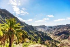 Palmträd på en brant berglutning i Barrancoen de Mogan på Gran Canaria arkivfoton