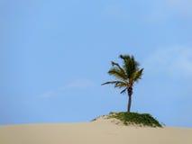 Palmträd på en dyn arkivbilder