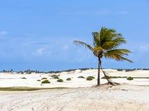 Palmträd på en dyn fotografering för bildbyråer
