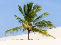 Palmträd på en dyn arkivbild