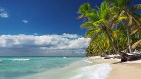 Palmträd på en ensam exotisk strand stock video