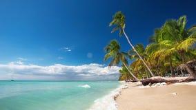 Palmträd på en ensam tropisk ö arkivfilmer
