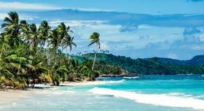 Palmträd på en isolerad strand med inga personer Fotografering för Bildbyråer