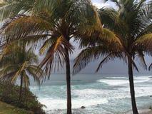 Palmträd på en molnig dag Arkivbild