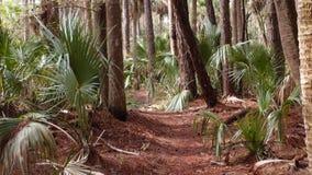 Palmträd på en naturslinga Arkivfoto