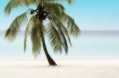 Palmträd på en strand Fotografering för Bildbyråer