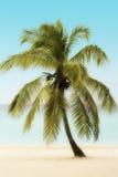 Palmträd på en strand arkivbild