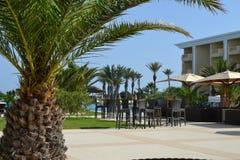 Palmträd på en strand Arkivbilder