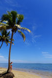 Palmträd på en strand, Vanua Levu ö, Fiji Royaltyfri Fotografi