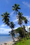 Palmträd på en strand, Vanua Levu ö, Fiji Royaltyfria Bilder