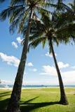 Palmträd på en tropisk semesterort arkivbild