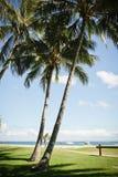 Palmträd på ett tropiskt beachfront royaltyfria foton