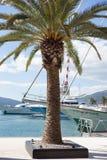 Palmträd på fartygmarina Royaltyfri Bild
