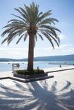 Palmträd på fartygmarina Fotografering för Bildbyråer