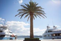 Palmträd på fartygmarina Royaltyfria Foton