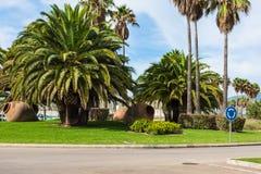 Palmträd på gatorna av Spanien royaltyfria bilder