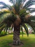 Palmträd på gräs royaltyfri fotografi