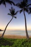 Palmträd på gryning på Ulua sätter på land, Maui, Hawaii Royaltyfria Foton