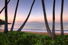 Palmträd på gryning på Ulua sätter på land, Maui, Hawaii fotografering för bildbyråer