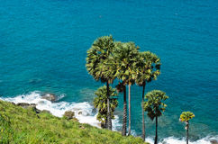 Palmträd på havsbakgrund Arkivfoto