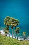 Palmträd på havsbakgrund Arkivfoton