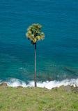 Palmträd på havsbakgrund Royaltyfria Foton