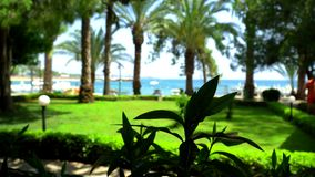 Palmträd på havsbakgrunden arkivfilmer