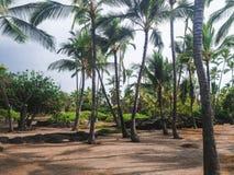 Palmträd på Honaunau för nollan för Pu-`-uhonuaen nationellt historiskt parkerar, mummel Arkivbild
