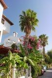 Palmträd på huset Arkivbilder