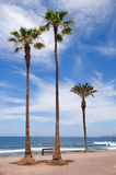 Palmträd på kusten Atlantic Ocean Arkivfoton