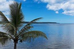 Palmträd på Lifou, Nya Kaledonien Royaltyfria Bilder