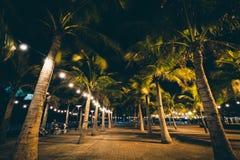 Palmträd på natten, i Pasay, tunnelbana Manila, Filippinerna Royaltyfri Foto