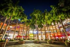 Palmträd på natten, på grönt bälte parkerar, i Makati, tunnelbanan Manila, arkivfoto