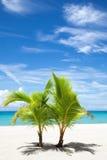 Palmträd på paradisön Royaltyfria Foton