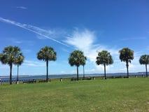 Palmträd på parkerar Arkivbild