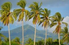 Palmträd på Playa El Espino Arkivfoto