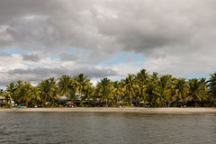 Palmträd på shoreline av Fiji Royaltyfria Foton