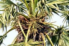 palmträd på solig dag i Thailand Arkivfoton