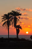Palmträd på solnedgångbakgrund. Royaltyfri Bild