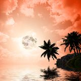 Palmträd a på solnedgångbakgrund Royaltyfri Bild