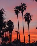 Palmträd på solnedgången i Los Angeles arkivbild