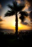 Palmträd på solnedgången som förbiser havet Arkivbilder