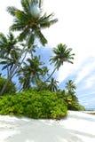 Palmträd på strand Fotografering för Bildbyråer