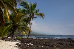 Palmträd på stranden Royaltyfri Foto