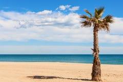 Palmträd på stranden arkivbilder