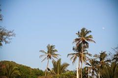 Palmträd på stranden royaltyfria foton