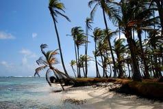 Palmträd på stranden Arkivbild